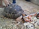 Zoo_107