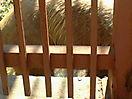 Zoo_115