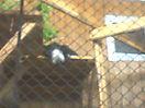 Zoo_52
