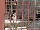 Zoo_55