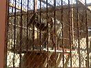Zoo_56