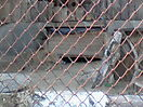 Zoo_58