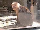 Zoo_64