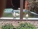 Zoo_86