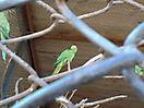 Zoo_88