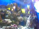 Zoo_8