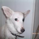 Соседская собака Бима